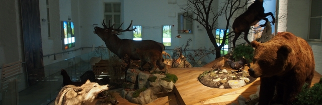 Hunting Museum